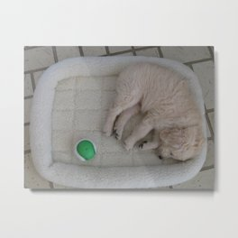 Puppy and Ball Metal Print