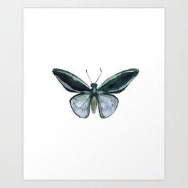 Butterfly - Nature Study #4 Art Print