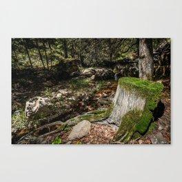 Tree Die Canvas Print