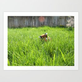 Backyard Wildlife  Art Print