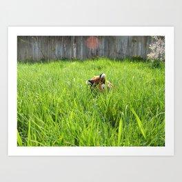 Backyard Wildlife  Art Print