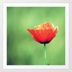 Vintage Summer - Poppy 2 Art Print
