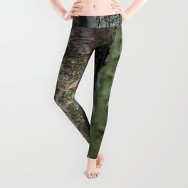 Oyster Fungi Leggings
