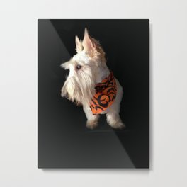 Wheaten Scottish Terrier - The Scottie Pose Metal Print