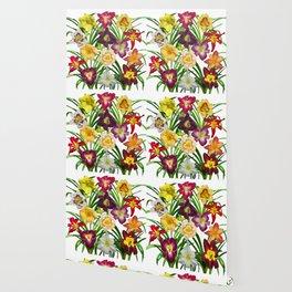 Display of daylilies I Wallpaper