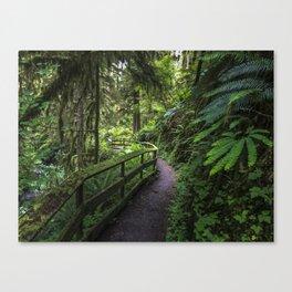 Walk through the rain forest Canvas Print