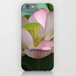 Lotus Going to Seed iPhone Case