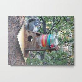 Squirrel Resort Metal Print