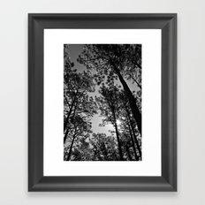 Under the Pines Framed Art Print