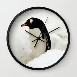 Gentoo Penguin in the Snow Wall Clock