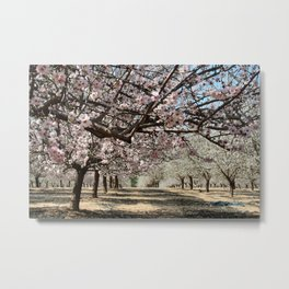 Almonds Metal Print