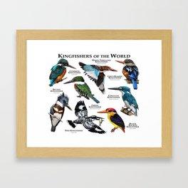 Kingfishers of the World Framed Art Print