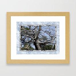 SUN-BLEACHED WINDSWEPT JUNIPER Framed Art Print