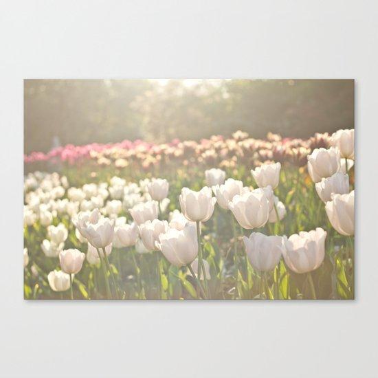 Tulips sunbathed Canvas Print