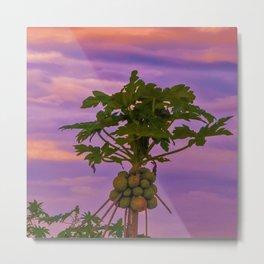 Papaya Tree And Brazilian Sunset Metal Print