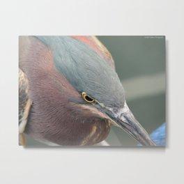 Feathery Headshot Metal Print