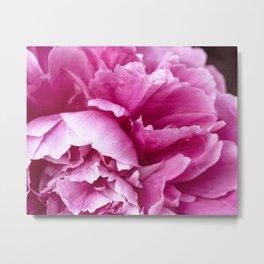 Alluring ~ Pink Peony Metal Print