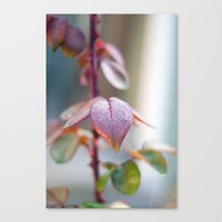 sparkles Canvas Prints featuring Sparkles by Katie Kirkland Photography