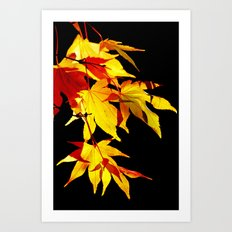 Golden Acer Art Print