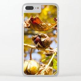 ripe fruit chestnut Clear iPhone Case