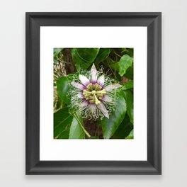 Passiflora Framed Art Print