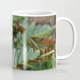 Fern Plant Nature Forest Northwest Hiking Outdoors Oregon Washington SPores  Coffee Mug