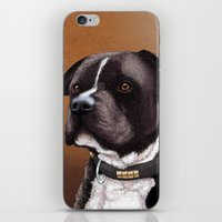 bull terrier iPhone & iPod Skins featuring Staffordshire bull terrier 2 by Carl Conway