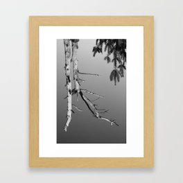 Upside Down Tree 1 Framed Art Print