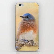 Autumn's Treasure iPhone & iPod Skin