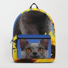 grey cat sitting in sunflower field Backpack