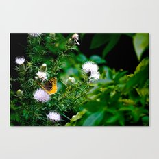Old Style Butterfly  Canvas Print