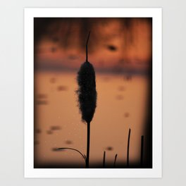 Cattail of glowing seeds Art Print