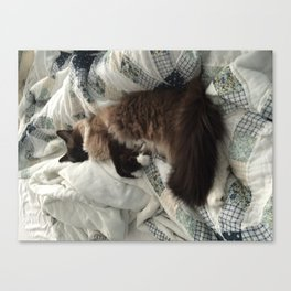 comfy cat Canvas Print