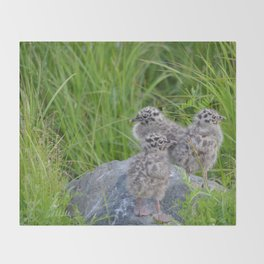 Triplets - Baby Seagulls Throw Blanket