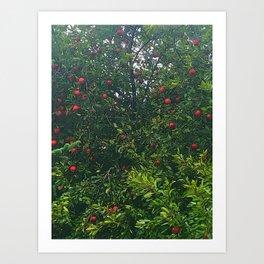 Apple Tree Close Up Art Print