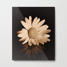 Albumen daisy Metal Print