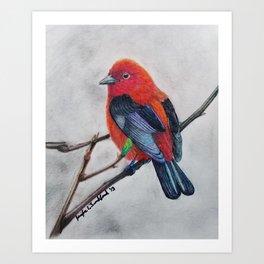 Scarlet Tanager Art Print