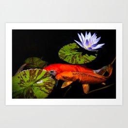 Koi Play In The Pond Photograph By Priya Ghose Art Print