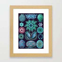 Ernst Haeckel Ascidiae Sea Squirts Framed Art Print