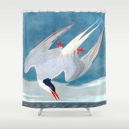 Arctic Tern James Audubon Vintage Scientific Illustration American Birds Shower Curtain