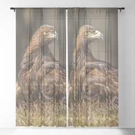 Grounded Eagle Sheer Curtain