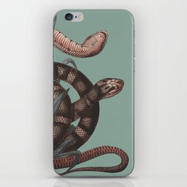 Snakes (animals collection) iPhone Skin