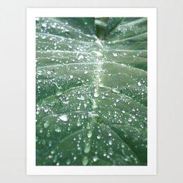 Diamonds after the Rain Art Print