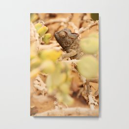 NAMIBIA ... the  chameleon Metal Print