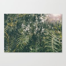 Light between the branches Canvas Print