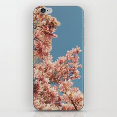 Pink Blossoms iPhone Skin