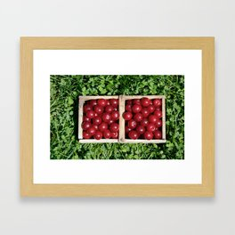 Prunus cerasus sour cherry fruit Framed Art Print