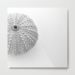 Urchin Black and White Metal Print