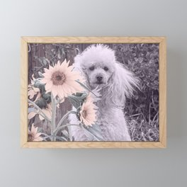 Poodle with sunflowers Framed Mini Art Print