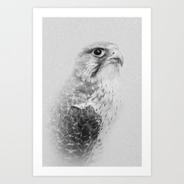 Hawk Portrait | Birds of Prey | Wildlife Photography Art Print